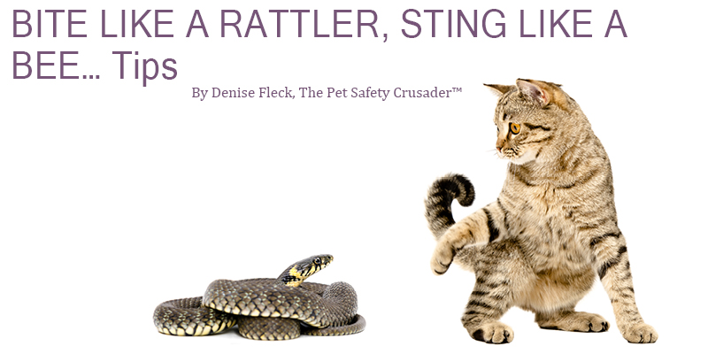 Cat Header Bite like a Rattler